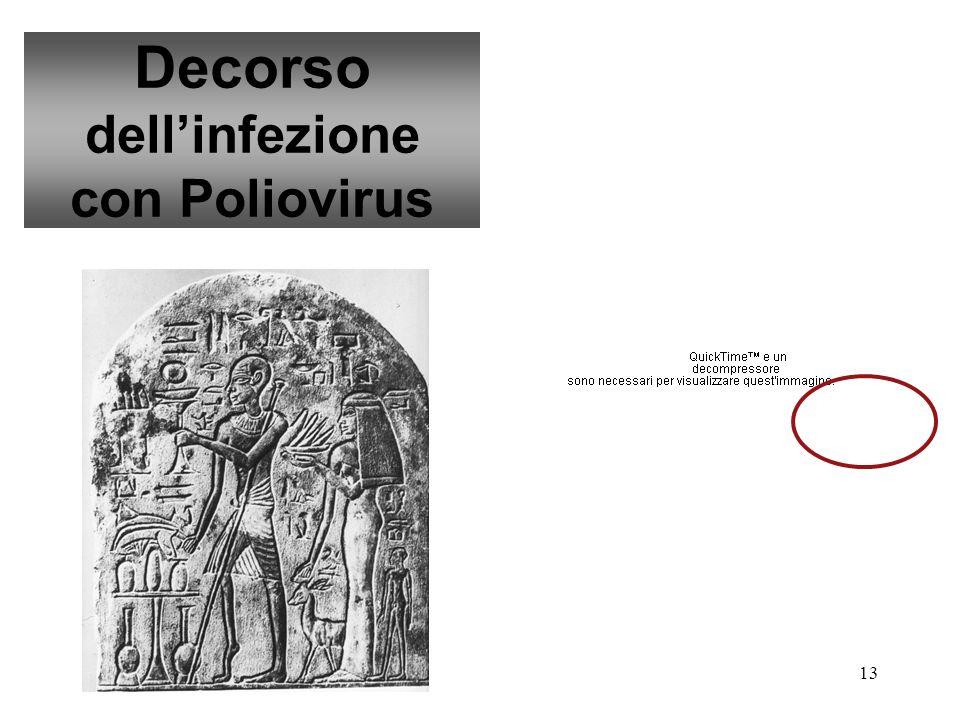 Decorso dell'infezione con Poliovirus