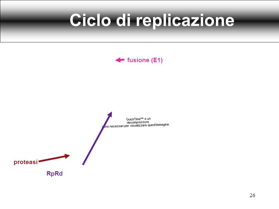 proteasi RpRd fusione (E1) Ciclo di replicazione