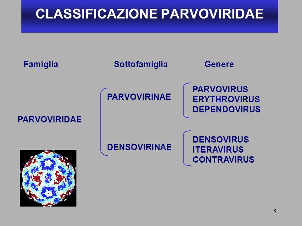 CLASSIFICAZIONE PARVOVIRIDAE