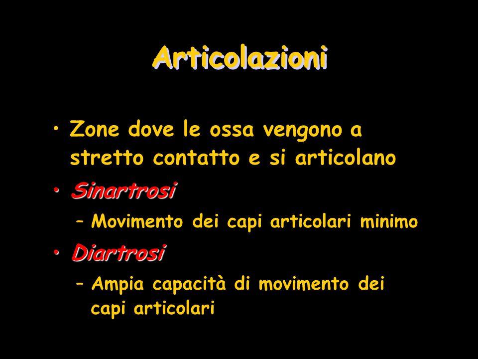 Articolazioni Zone dove le ossa vengono a stretto contatto e si articolano. Sinartrosi. Movimento dei capi articolari minimo.