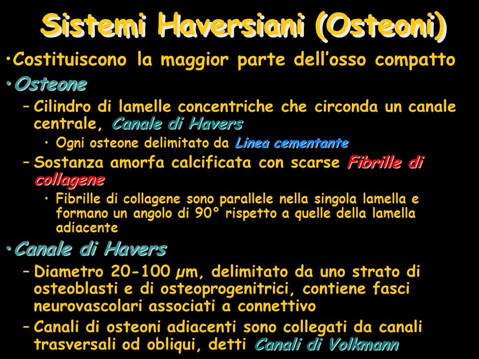 Sistemi Haversiani (Osteoni)