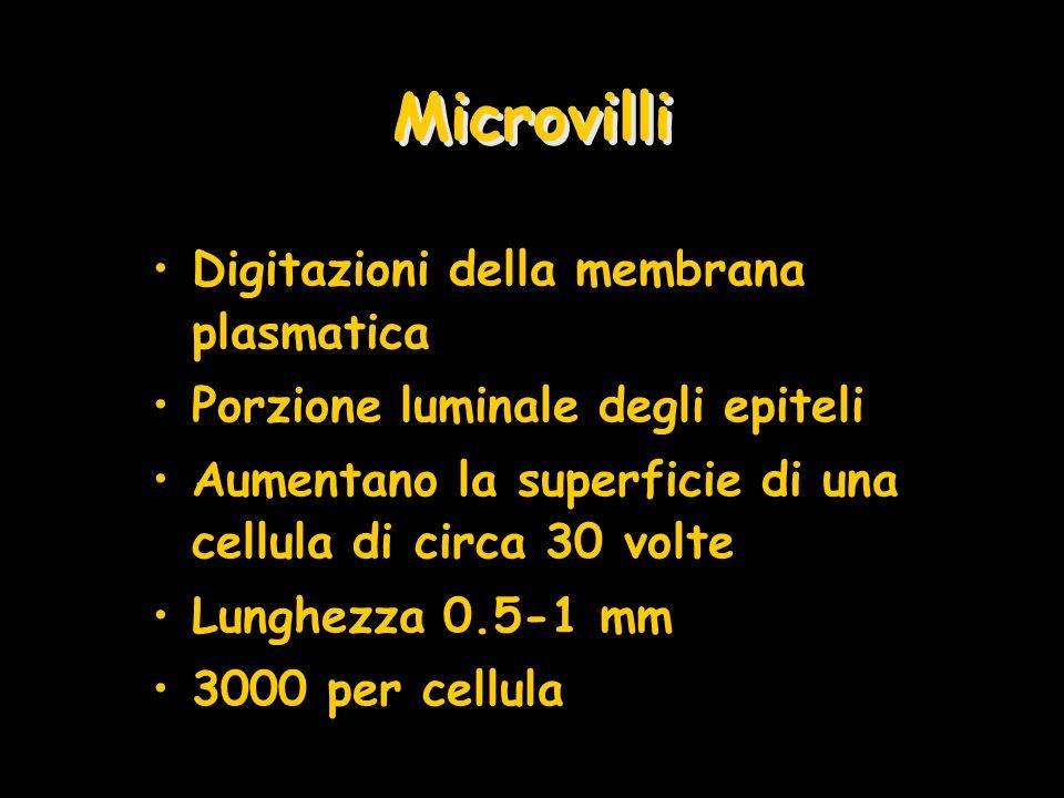 Microvilli Digitazioni della membrana plasmatica