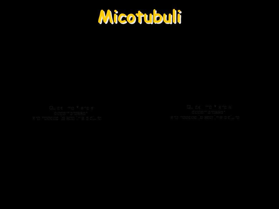 Micotubuli