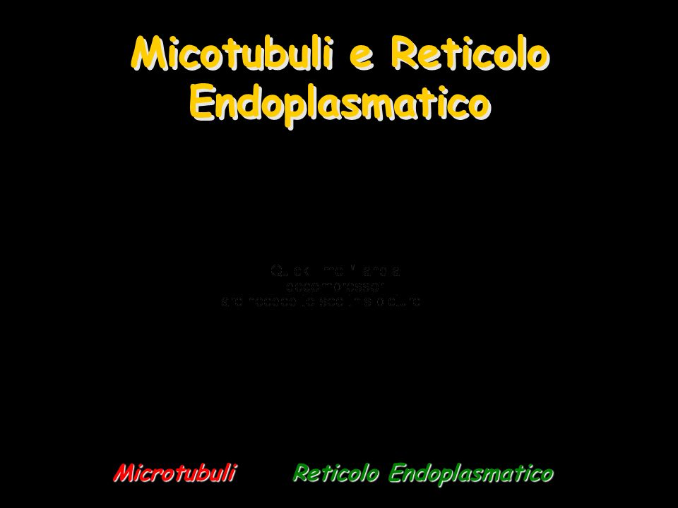 Micotubuli e Reticolo Endoplasmatico