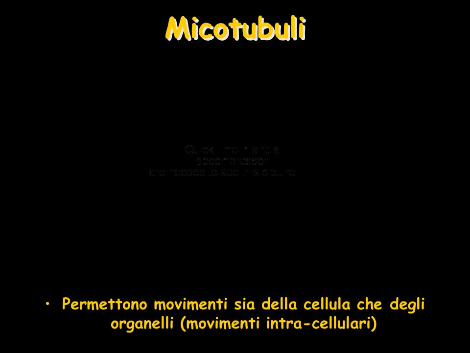 Micotubuli Permettono movimenti sia della cellula che degli organelli (movimenti intra-cellulari)