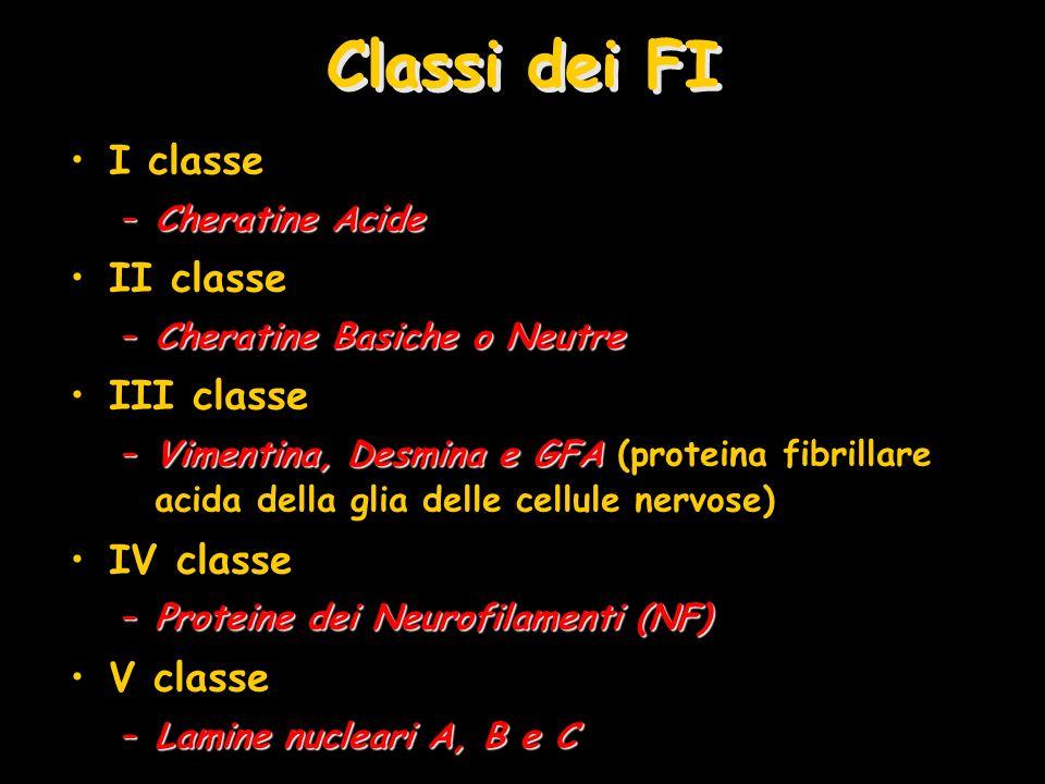 Classi dei FI I classe II classe III classe IV classe V classe