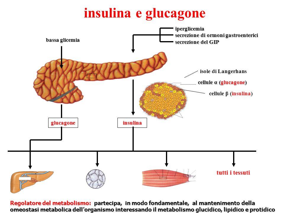insulina e glucagone tutti i tessuti iperglicemia