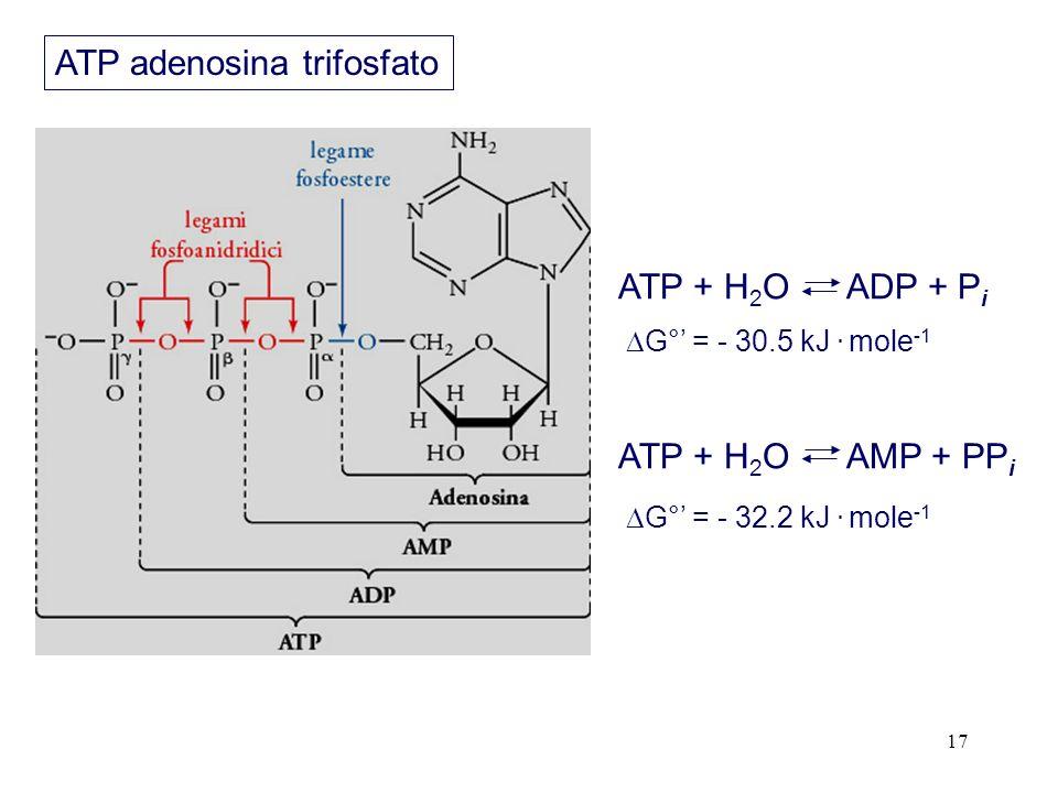 ATP adenosina trifosfato
