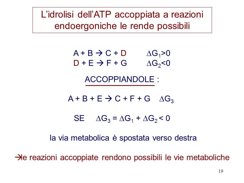 L'idrolisi dell'ATP accoppiata a reazioni endoergoniche le rende possibili