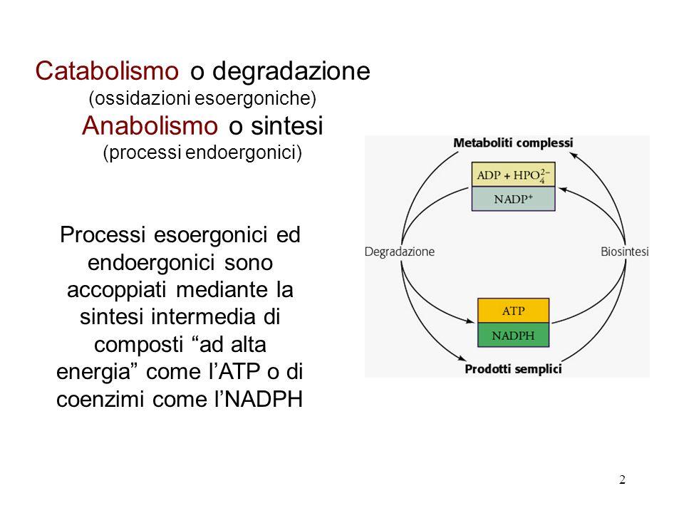 Catabolismo o degradazione Anabolismo o sintesi