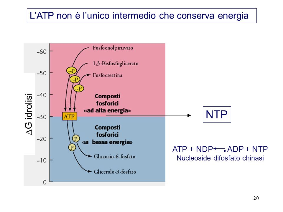 Nucleoside difosfato chinasi