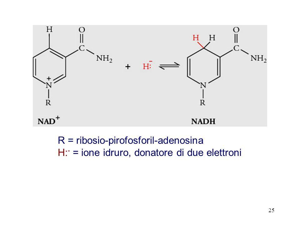 R = ribosio-pirofosforil-adenosina