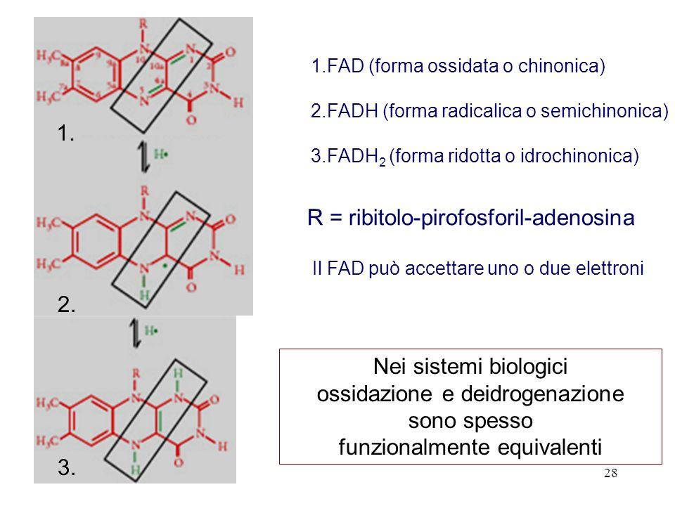 R = ribitolo-pirofosforil-adenosina