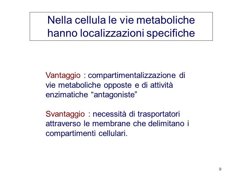 Nella cellula le vie metaboliche hanno localizzazioni specifiche