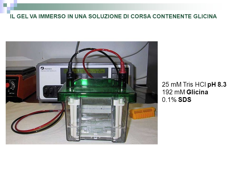 25 mM Tris HCl pH 8.3 192 mM Glicina 0.1% SDS