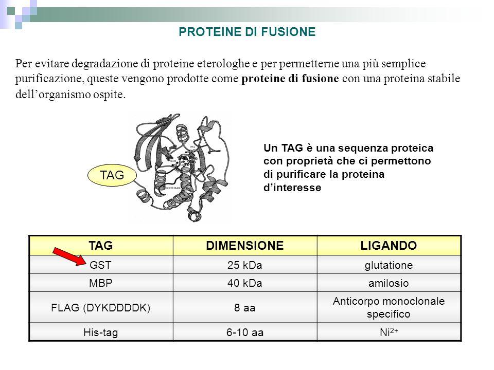 Anticorpo monoclonale specifico