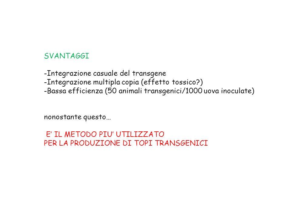 SVANTAGGI Integrazione casuale del transgene. Integrazione multipla copia (effetto tossico )