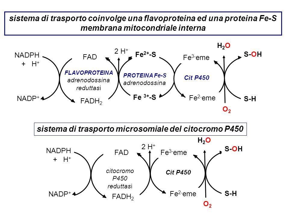 sistema di trasporto microsomiale del citocromo P450