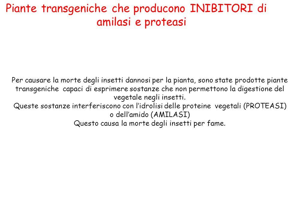 Piante transgeniche che producono INIBITORI di amilasi e proteasi