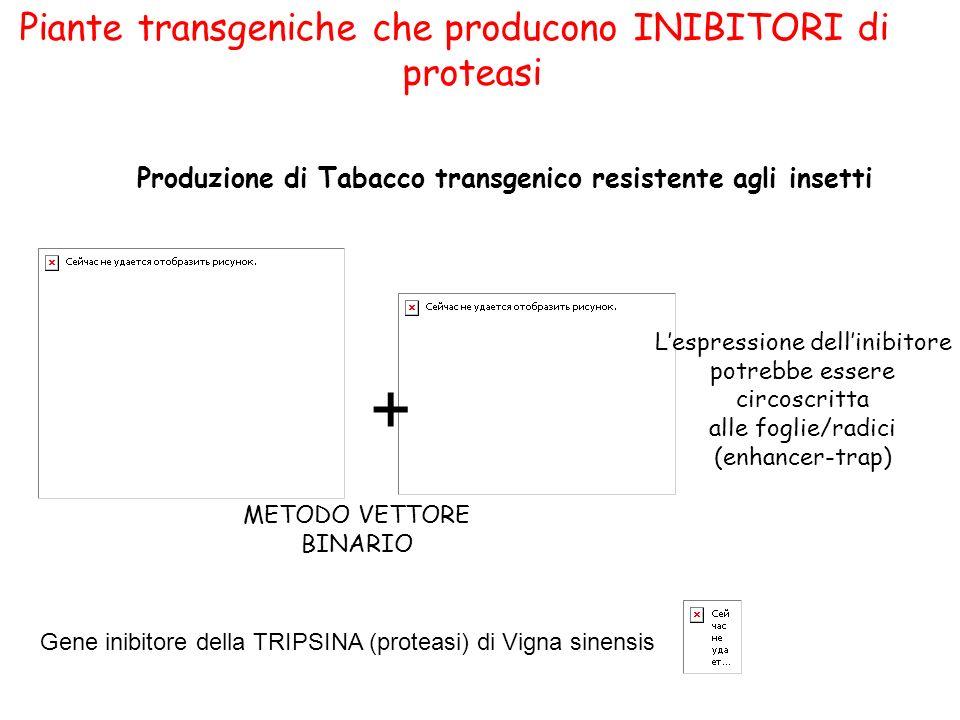 + Piante transgeniche che producono INIBITORI di proteasi