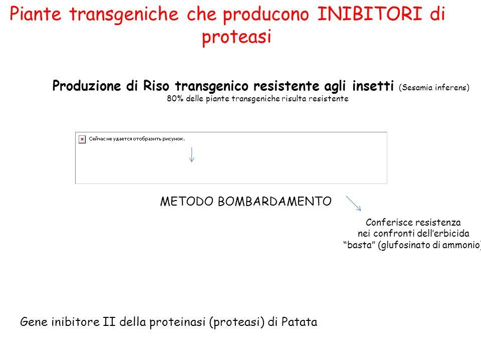 Piante transgeniche che producono INIBITORI di proteasi