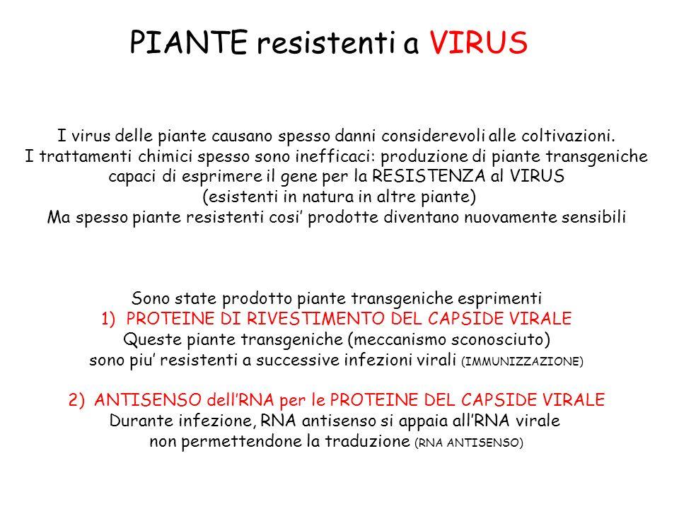 PIANTE resistenti a VIRUS