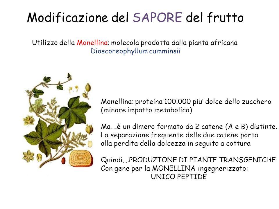 Modificazione del SAPORE del frutto