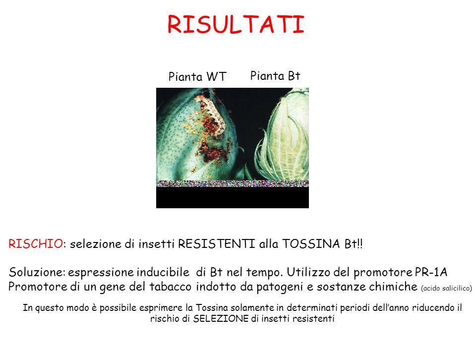 rischio di SELEZIONE di insetti resistenti