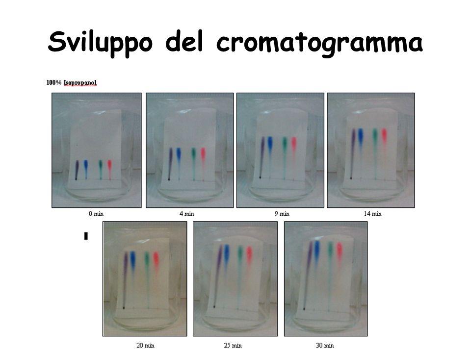 Sviluppo del cromatogramma