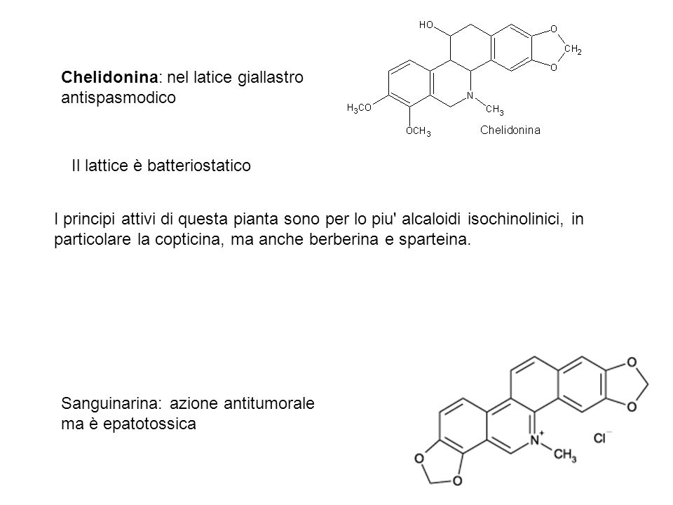 Chelidonina: nel latice giallastro