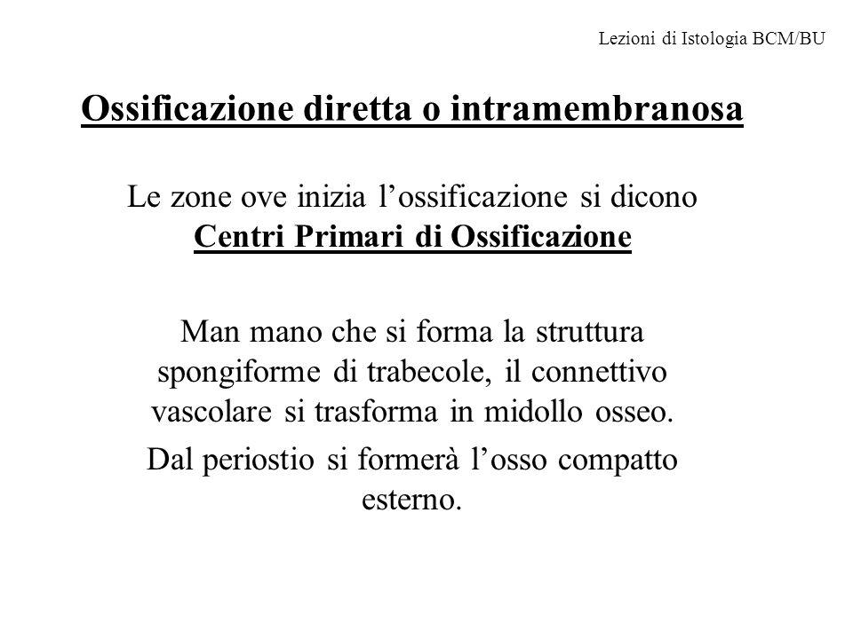 Ossificazione diretta o intramembranosa