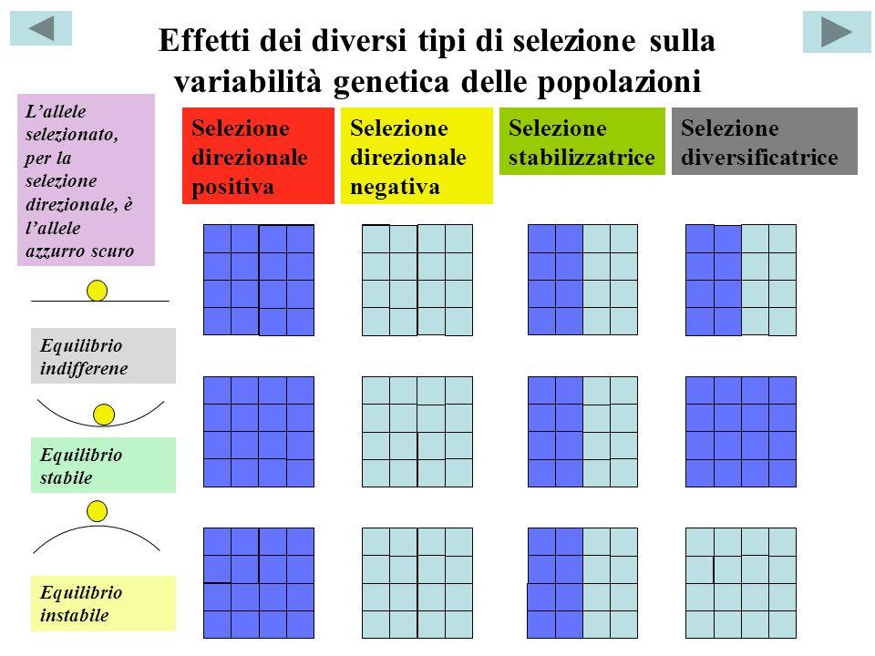 Effetti dei diversi tipi di selezione sulla variabilità genetica delle popolazioni