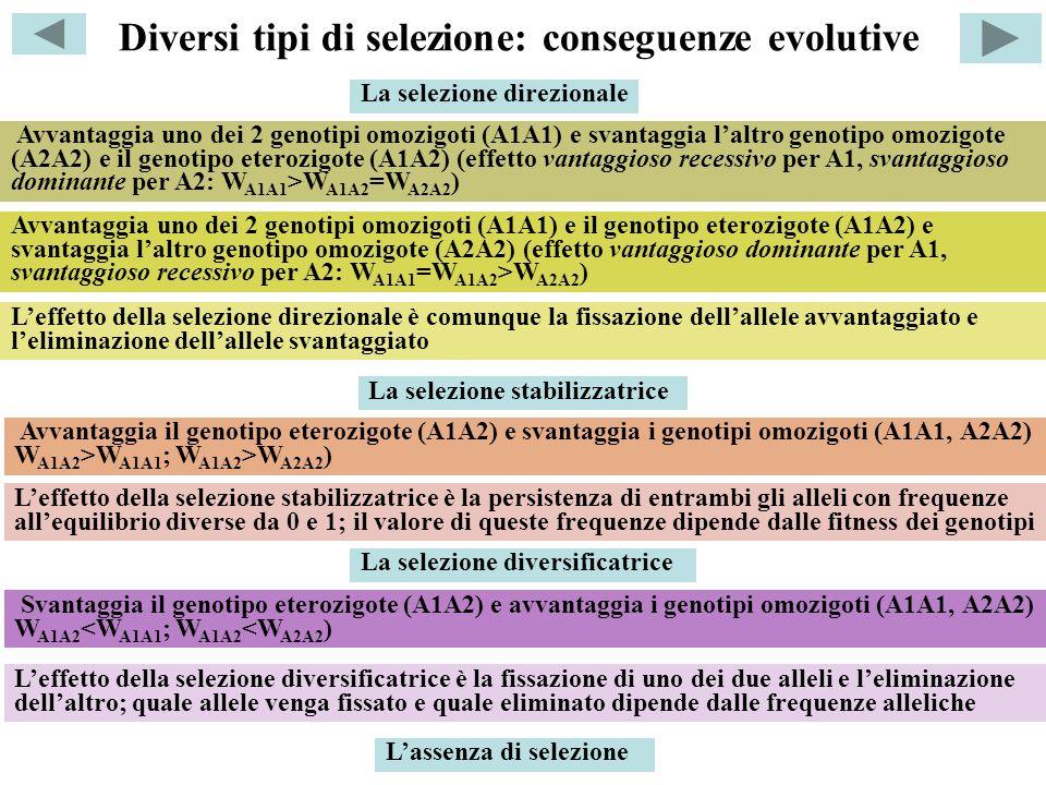 Diversi tipi di selezione: conseguenze evolutive