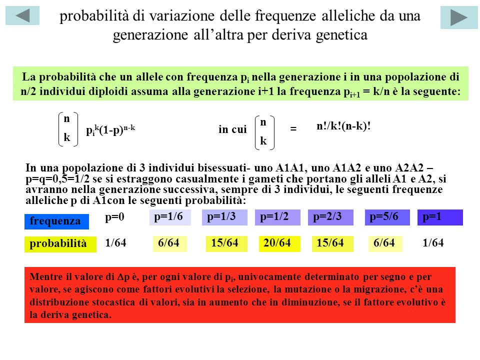 probabilità di variazione delle frequenze alleliche da una generazione all'altra per deriva genetica