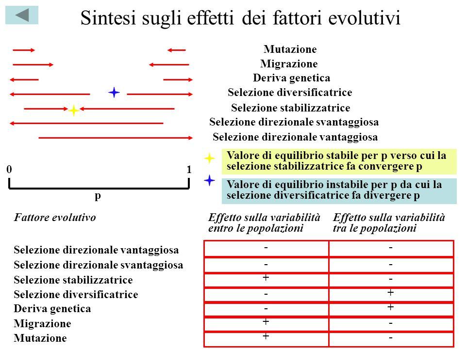 Sintesi sugli effetti dei fattori evolutivi