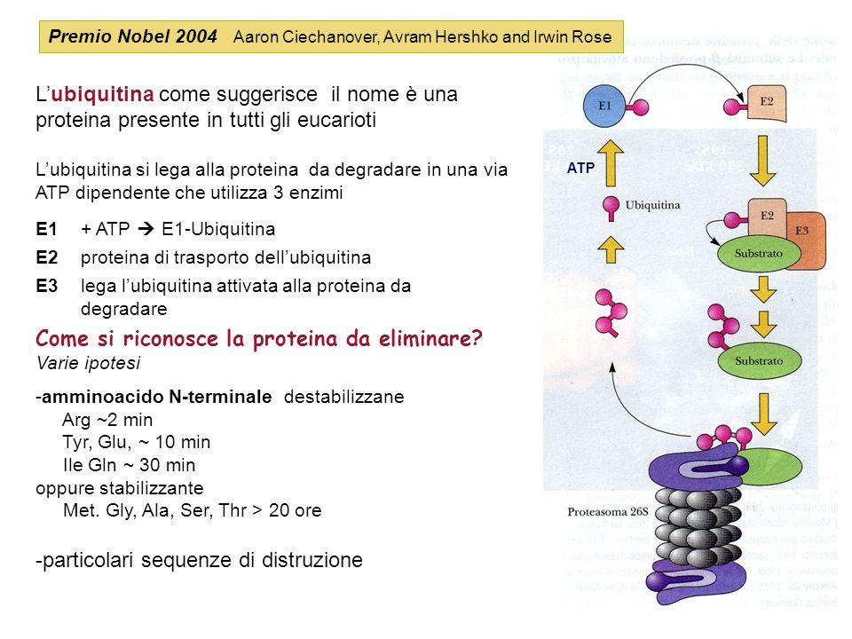 Come si riconosce la proteina da eliminare