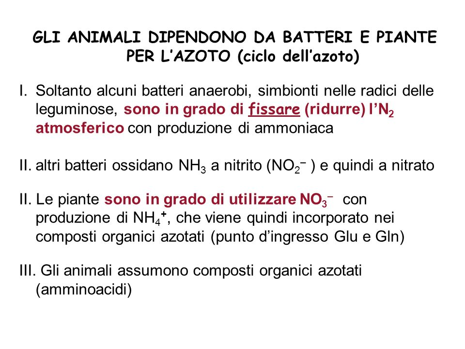 GLI ANIMALI DIPENDONO DA BATTERI E PIANTE PER L'AZOTO (ciclo dell'azoto)