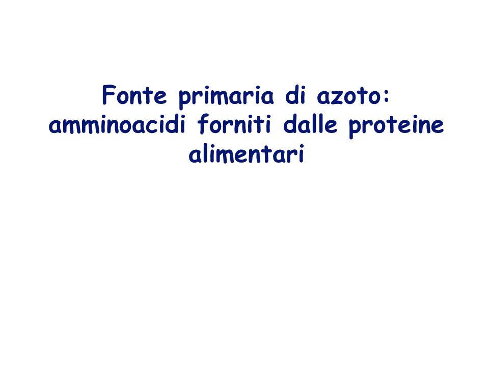 Fonte primaria di azoto: amminoacidi forniti dalle proteine alimentari