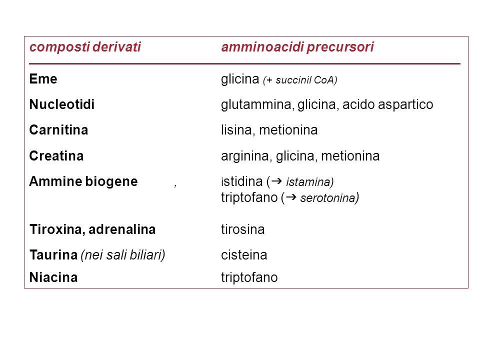 composti derivati amminoacidi precursori