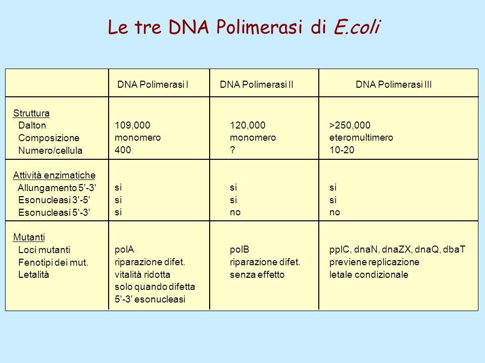 Le tre DNA Polimerasi di E.coli