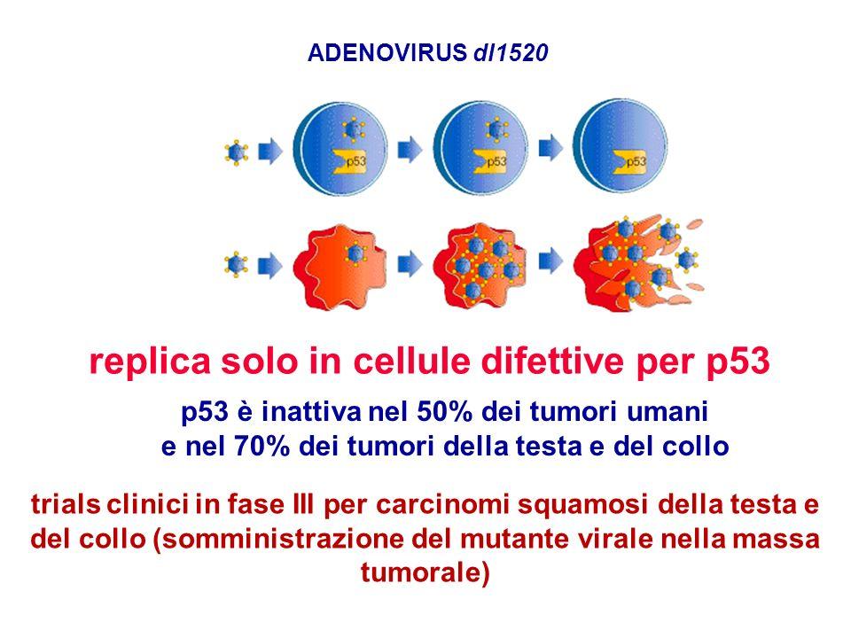 replica solo in cellule difettive per p53