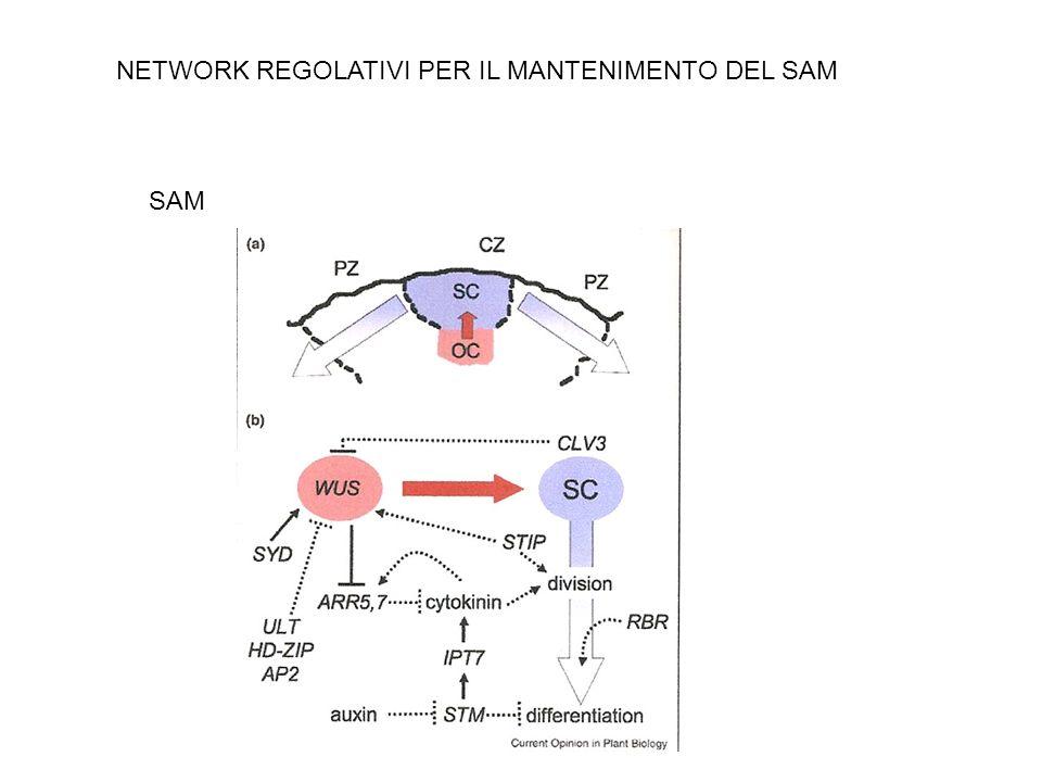 NETWORK REGOLATIVI PER IL MANTENIMENTO DEL SAM