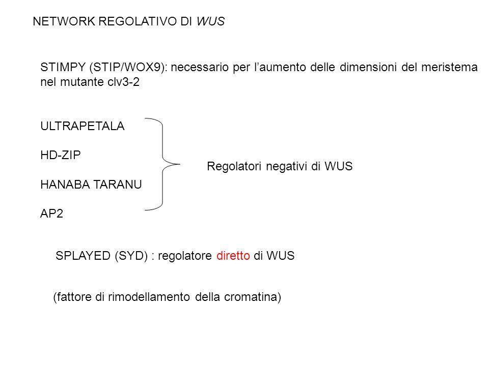 NETWORK REGOLATIVO DI WUS