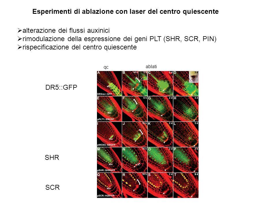Esperimenti di ablazione con laser del centro quiescente