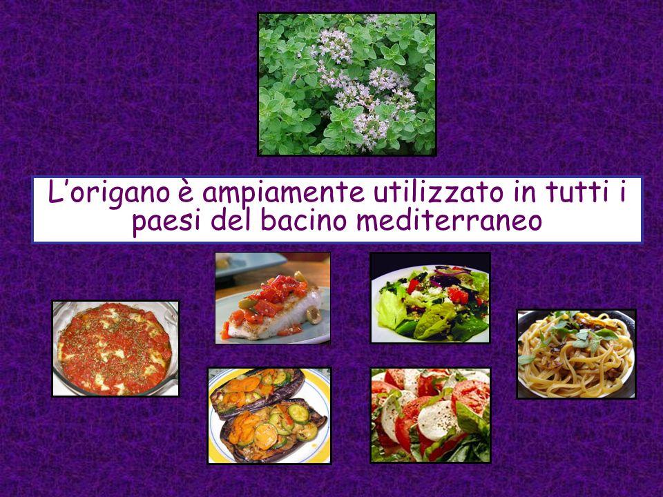 L'origano è ampiamente utilizzato in tutti i paesi del bacino mediterraneo