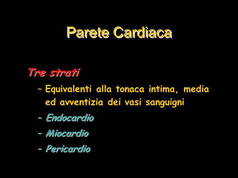 Parete Cardiaca Tre strati