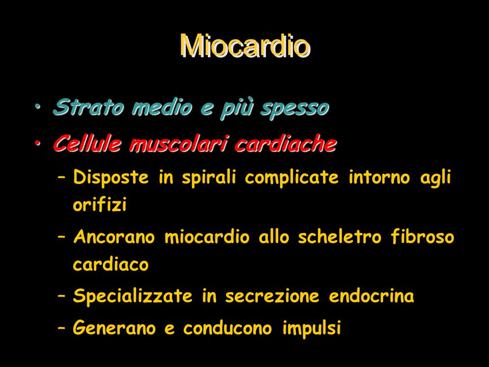 Miocardio Strato medio e più spesso Cellule muscolari cardiache