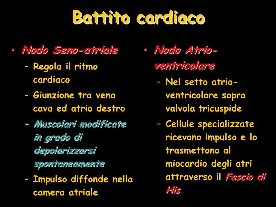 Battito cardiaco Nodo Seno-atriale Nodo Atrio-ventricolare