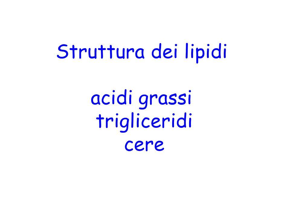 Struttura dei lipidi acidi grassi trigliceridi cere