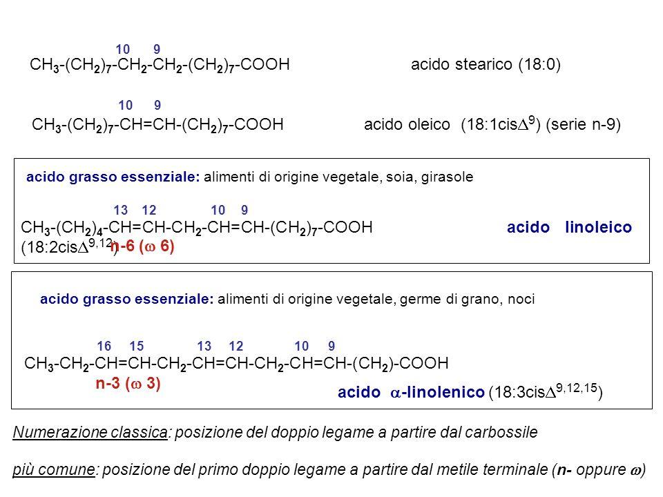 CH3-(CH2)7-CH2-CH2-(CH2)7-COOH acido stearico (18:0)